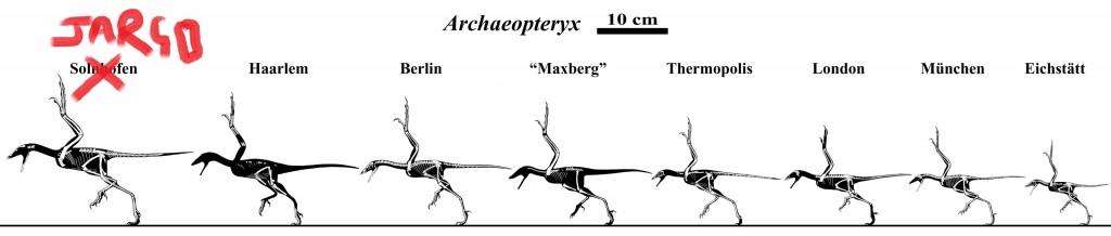 Archaeopteryx_skeletals